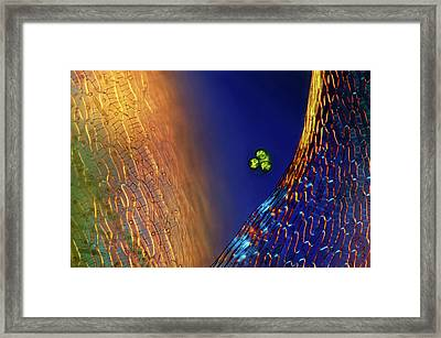 Green Algae And Sphagnum Moss Framed Print