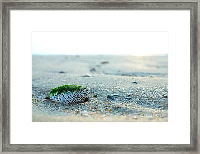 Green Algae Rock Framed Print by Wei Kuan Tay