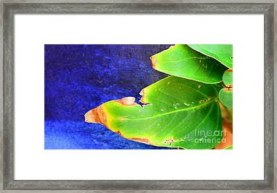Green And Blue  Framed Print by Bobby Mandal