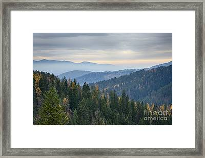 Green And Gold Forest Framed Print