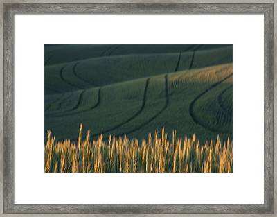 Green And Gold Framed Print by Latah Trail Foundation