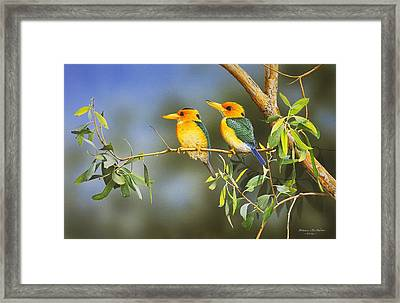 Green And Gold - Yellow-billed Kingfishers Framed Print