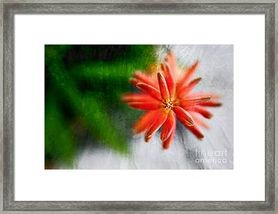 Green And Orange Framed Print