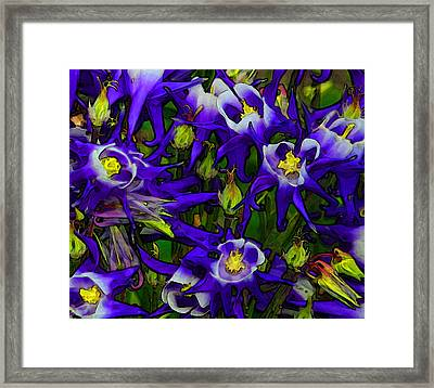 Green And Purple Burst Abstract Framed Print by James Hammen