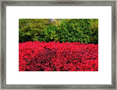 Green And Red Autumn Framed Print