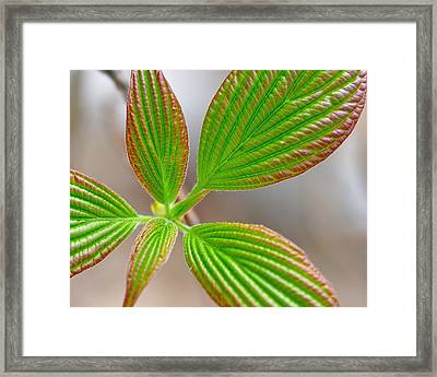 Green And Red Leaves Framed Print