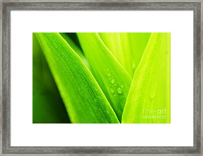 Green And Wet Framed Print by Thomas R Fletcher