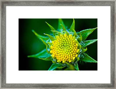 Green And Yellow Bloom Framed Print by Sennie Pierson