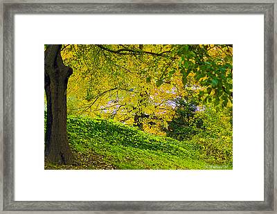 Green And Yellow Framed Print by Brian Wallace