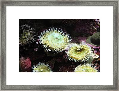 Green Anemone 5d24898 Framed Print