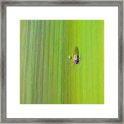 Green Aphid Insect Framed Print