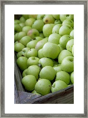 Green Apples Framed Print by Rebecca Cozart