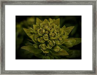 Green Arrangement Framed Print by Martin Newman