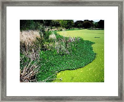 Green Belt Framed Print