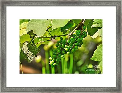 Green Berries Framed Print by Kaye Menner