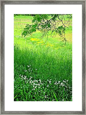 Green Framed Print by Beverly Hammond