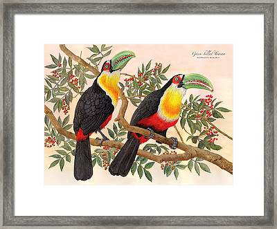 Green-billed Toucan Framed Print by Nelson Caramico
