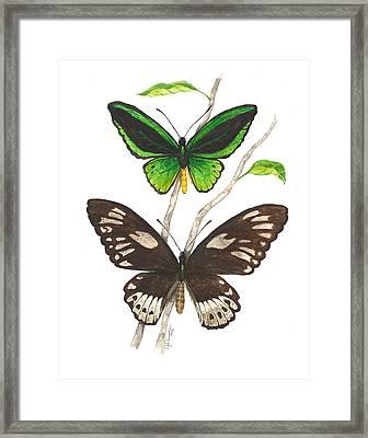 Green Birdwing Butterfly Framed Print
