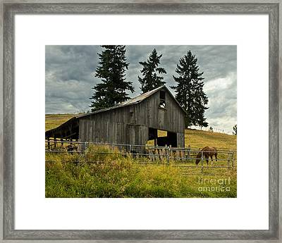 Green Bluff Horsebarn Framed Print