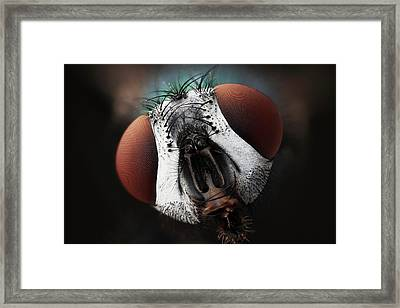 Green Bottle Fly Framed Print by Karl Gaff