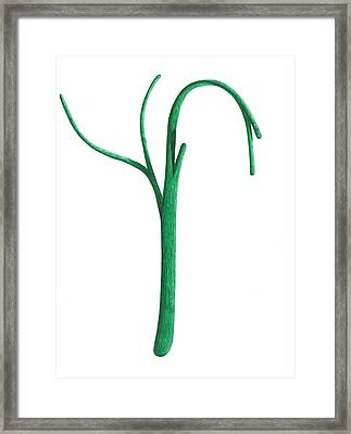 Green Branche Framed Print
