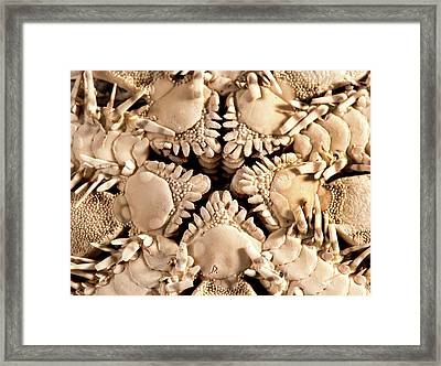 Green Brittle Starfish Framed Print by Natural History Museum, London