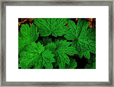 Green Burst Framed Print by James Hammen