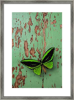 Green Butterfly On Old Green Wall Framed Print by Garry Gay