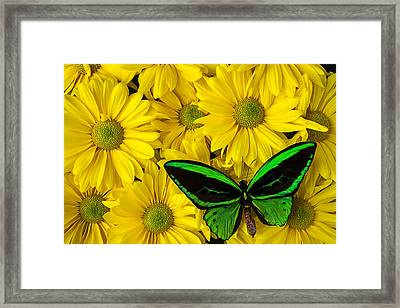 Green Butterfly Resting Framed Print