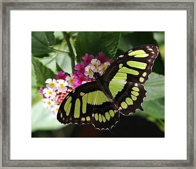 Green Butterfly With Flowers Framed Print