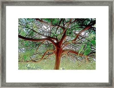 Green Canopy Framed Print