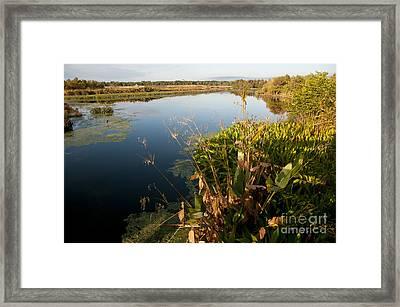 Green Cay Wetlands, Fl Framed Print by Mark Newman