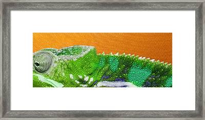 Green Chameleon On Orange Framed Print by Serge Averbukh