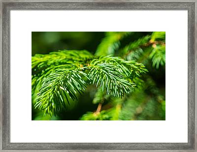 Green Christmas Tree 2 Framed Print