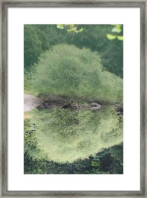 Green Clam Reflection Framed Print
