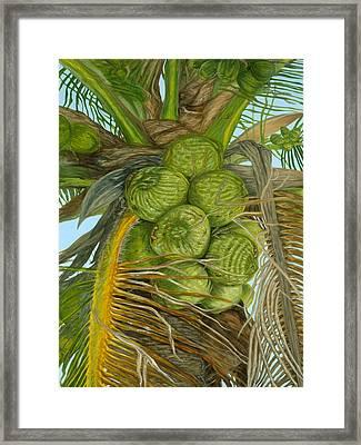 Green Coconut Framed Print