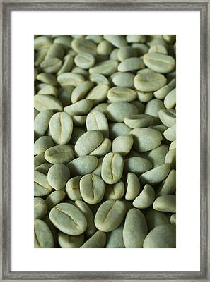 Green Coffee Beans In The Drying Stage Framed Print by Charmian Vistaunet