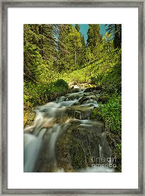 Green Colors And A Stream Framed Print by Mitch Johanson