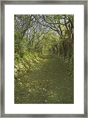 Green Country Lane Framed Print by Jane McIlroy