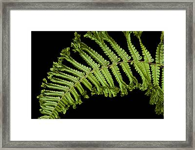 Framed Print featuring the photograph Green Curve by Trevor Chriss