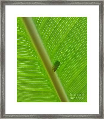 Green Framed Print by Cynthia Syracuse