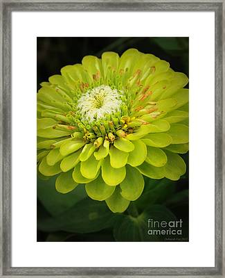 Green Dahlia Framed Print