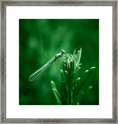 Green Damselfly Framed Print