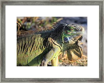 Green Day Framed Print