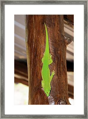 Green Day Gecko Framed Print