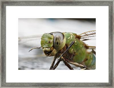 Green Dragon  Framed Print by Shoal Hollingsworth