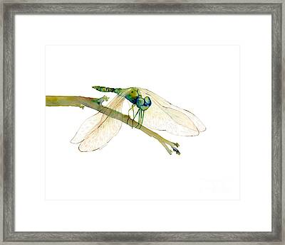 Green Dragonfly Framed Print by Amy Kirkpatrick