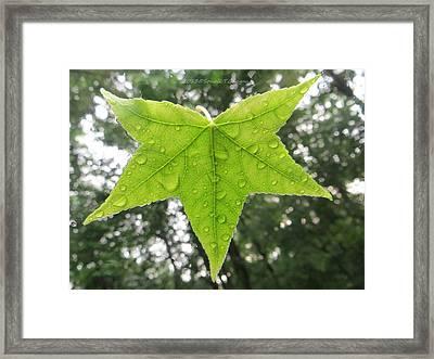 Green Droplets Framed Print by Sonali Gangane