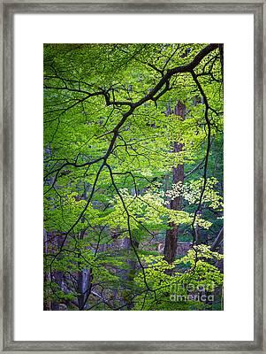 Green Explosion Framed Print