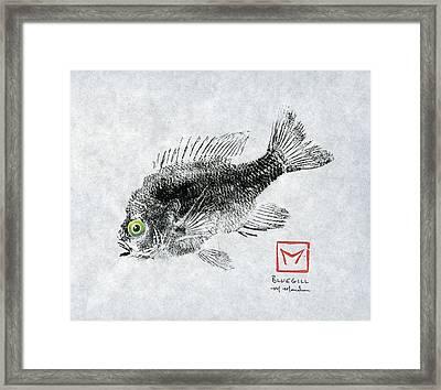 Green-eyed Bluegill Framed Print by Matt Monahan